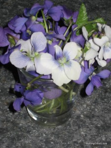 violets in shot glass