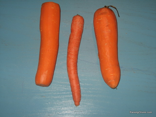 monster carrots