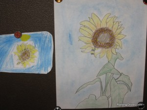 Sunflower drawings from nature friend