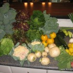 Our CSA shares for the week (plus an additional bushel of broccoli)