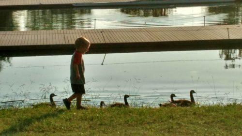 valor geese lake
